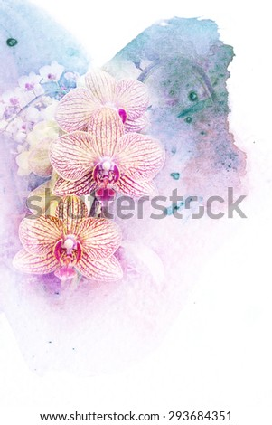 Abstract watercolor illustration of blossom phalaenopsis orchid. Watercolor painting on paper. Floral watercolor illustration. - stock photo