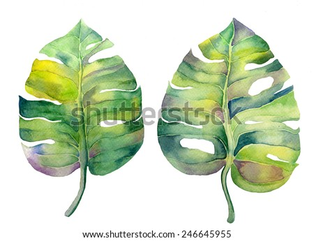 Abstract watercolor monstera leaves. Can be used for web pages, identity style, printing, invitations, banners, cards, leaflets. - stock photo