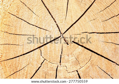 Abstract wood texture background. - stock photo