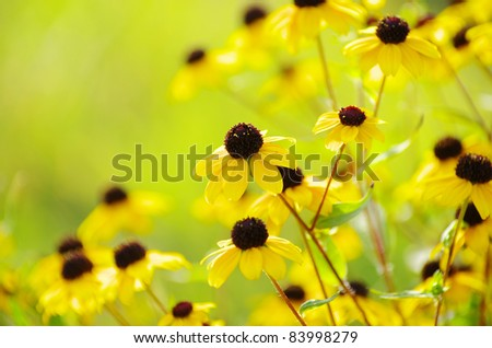 abstract yellow flowers on field - stock photo