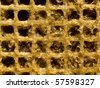 Abstract yellow reticulation gluten pattern closeup background. - stock photo
