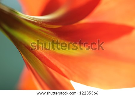 abstraction, flower to red lily from back side - stock photo
