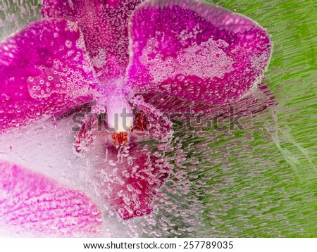 abstraction of a purple orchid with air bubbles in the ice on a green background - stock photo