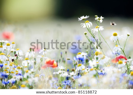 abundance of blooming wild flowers on the meadow at spring time - stock photo