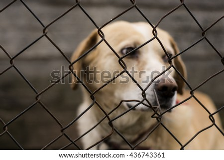 Abused abandoned dog in exile looking sad - stock photo