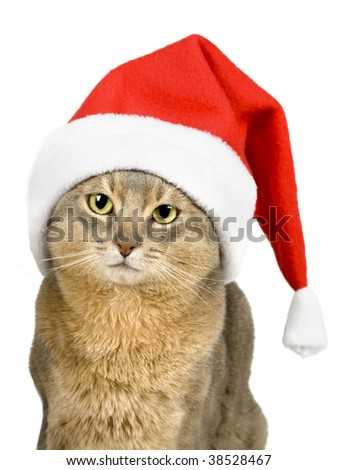 Abyssinian cat in Santa Claus hat isolated on white - stock photo