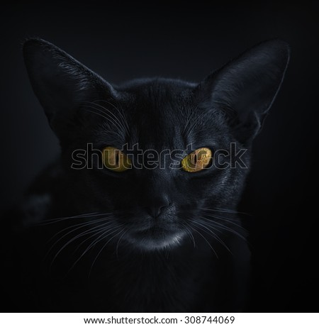 Abyssinian cat, Lithuania, 2014. - stock photo