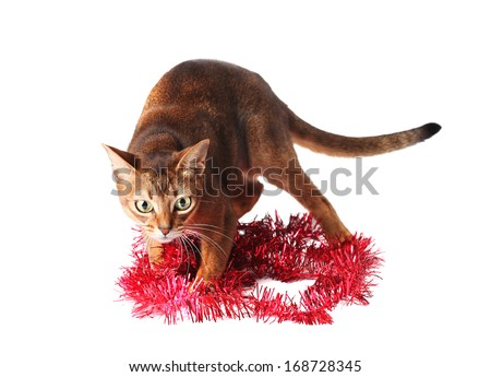 Abyssinian cat plays with tinsel - stock photo