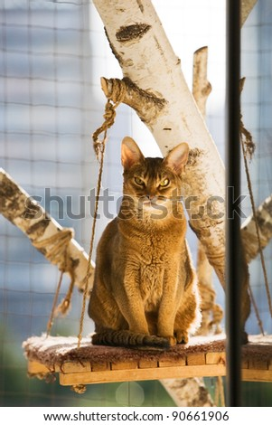 Abyssinian cat sitting on a scratching post in balcony
