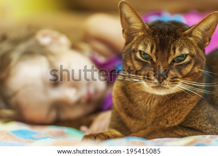 Abyssinian cat with brown wool with watchfulness looks towards danger. And sleep little girl. - stock photo