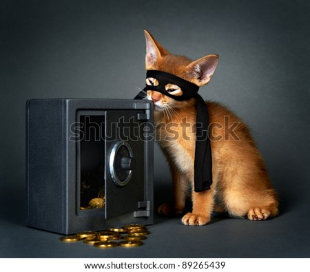 Abyssinian kittens. Age - 1 month - stock photo
