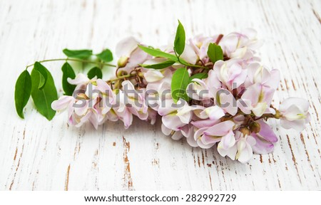 Acacia flowers on a old white wooden background - stock photo