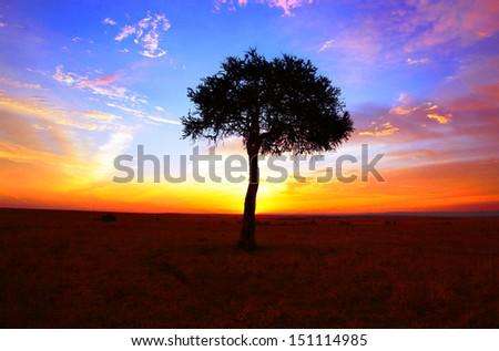 Acacia sunset - stock photo