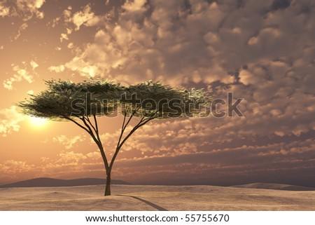 Acacia tree golden sunset on imaginary sand dunes or plain. - stock photo