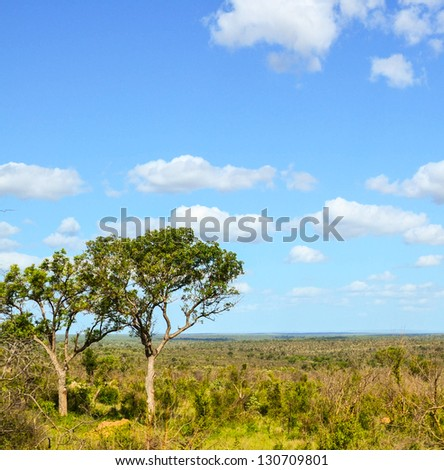 Acacia tree in the open savanna plains - stock photo