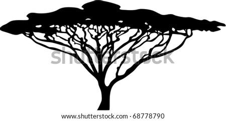 acacia tree silhouette raster - stock photo