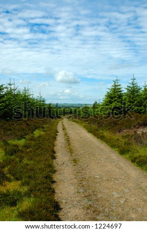Access road through a forest in Scotland - stock photo