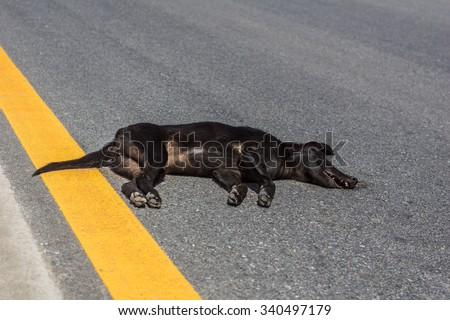 accident on the road with a toy dog - stock photo