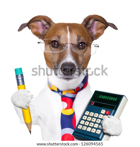 accountant dog with pencil and calculator - stock photo
