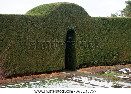 accurately cut green hedge / green hedge - stock photo