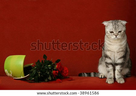 Accused cat and a broken pot of flowers - stock photo