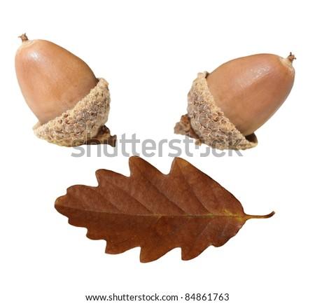acorn and oak leaf  isolated on white background, - stock photo
