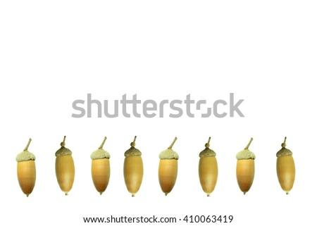 Acorn frame - stock photo
