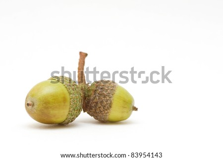 Acorn in shell on isolated background