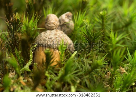 Acorn on the moss - stock photo