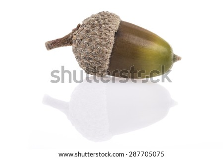 acorn on white with reflection - stock photo