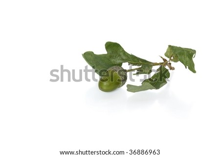 Acorn with leaf against white background (isolated)