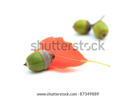 Acorns and leaves - stock photo