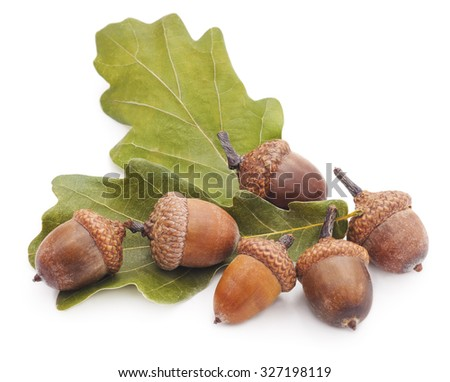 Acorns and leaves isolated on a white background. - stock photo