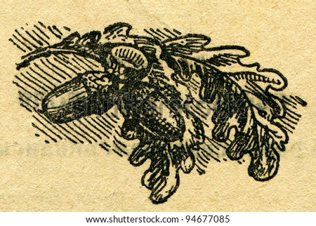 """acorns on a branch - an illustration from the book """"In the wake of Robinson Crusoe"""", Moscow, USSR, 1946. Artist Petr Pastukhov - stock photo"""