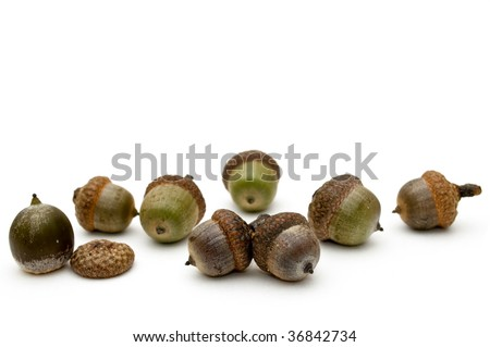 Acorns on a white background.