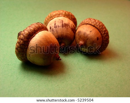 Acorns on an green colored background