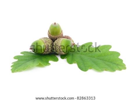 acorns on oak leaves on white background - stock photo
