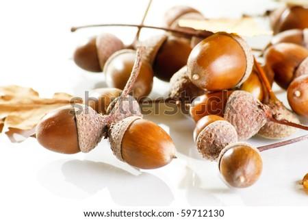 acorns on the white - stock photo