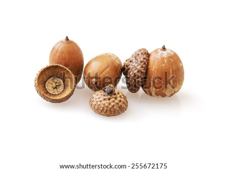 Acorns on the white background. The acorn, or oak nut, is the nut of the oaks and their close relatives (genera Quercus and Lithocarpus, in the family Fagaceae). Studio photo. - stock photo