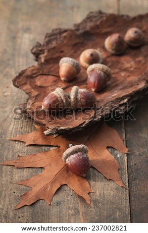Acorns on tree bark and oak leave. - stock photo