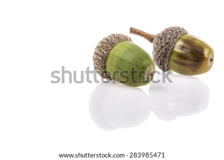 acorns on white with reflection - stock photo