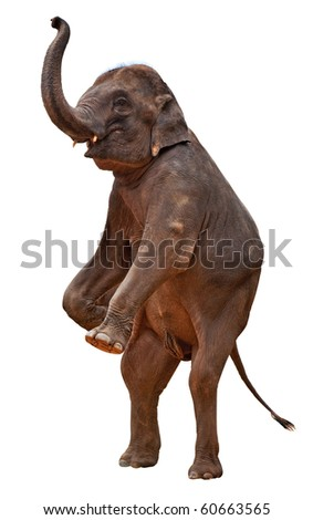 acrobatic elephant include clipping path