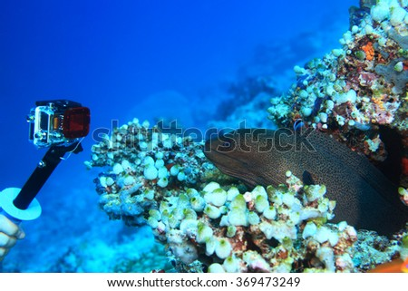 Action camera shooting dangerous moray eel underwater in the coral reef  - stock photo