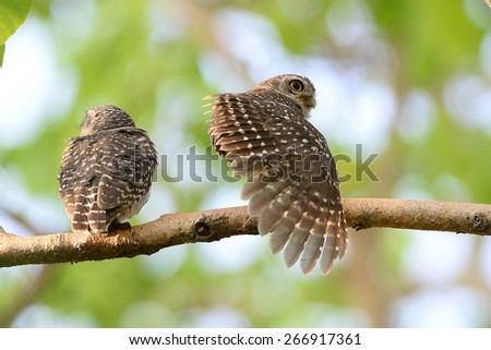 Action of Bird. - stock photo