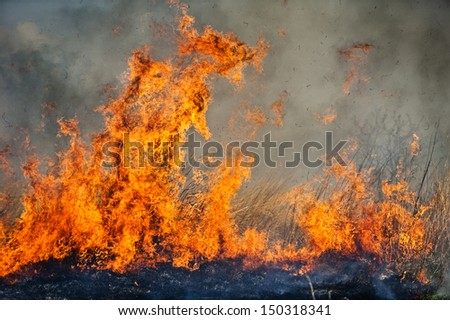 action shot of a large grass fire - stock photo