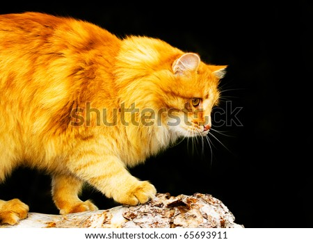 active cat attack his prey - stock photo