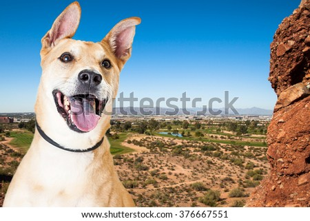 Active dog outdoors overlooking a scenic view of Phoenix, Arizona from Papago Park - stock photo