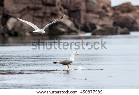 active sea gulls seagulls over blue sea ocean birds - stock photo