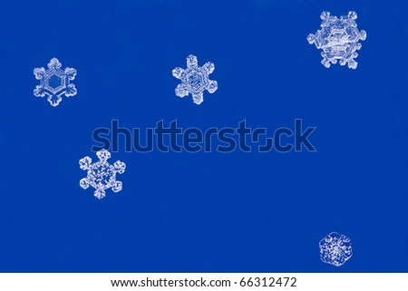 actual snowflakes on a blue background with plenty of room for text - stock photo