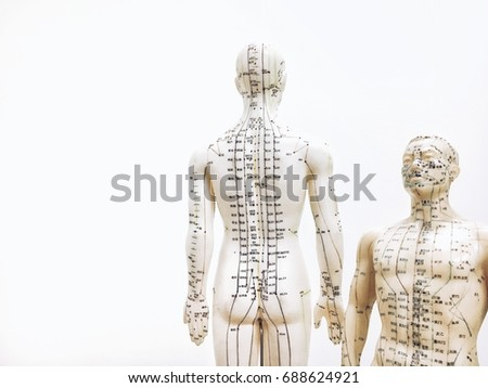 Acupuncture point models for Traditional Chinese Medicine (3)